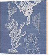 Ceratodictyon Spongiosum Zanard Wood Print