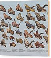 Ceratopsian Cornucopia Wood Print