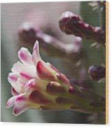 Cereus Hexagonus Pink Wood Print