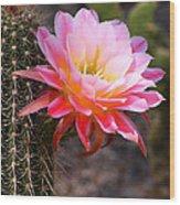 Cereus In Pink Wood Print