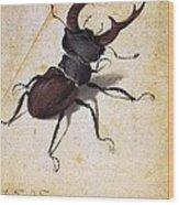 Cervus Lucanus Wood Print
