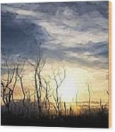 Cezanne Style Digital Painting Stark Bush Silhouette Against Stunning Sunset Sky Wood Print
