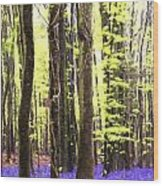 Cezanne Style Digital Painting Vibrant Bluebell Forest Landscape Wood Print