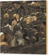 Chagras Round-up Cattle Ecuador Wood Print