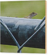 Chain Link Highway Wood Print