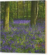 Chalet Wood Wanstead Park Bluebells Wood Print