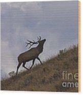 Challenge Of The Bull Elk Wood Print