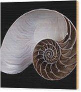 Chambered Nautilus Cross-section Wood Print