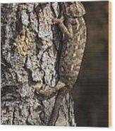 Chameleon Climbing Wood Print
