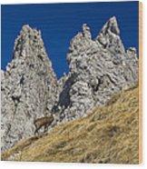 chamois in Alps Wood Print