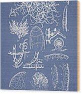 Champia Parvula Wood Print by Aged Pixel