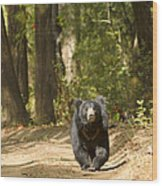 Chance Encounter With The Hairy One Wood Print