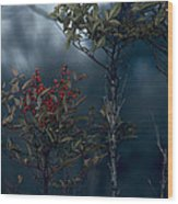 Change Of Season Wood Print by Bonnie Bruno