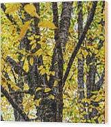 Changing Birch Wood Print