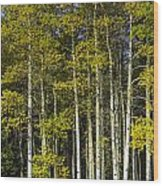 Changing Colors Wood Print by Tom Wilbert
