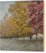 Changing Of The Seasons Wood Print by Jeff Swanson
