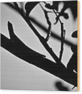 Chapel Trail 3 Wood Print
