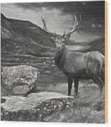 Charcoal Drawing Image Red Deer Stag In Moody Dramatic Mountain Sunset Landscape Wood Print
