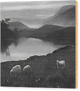 Charcoal Drawing Image Sheep In Field At Sunrise Landscape With Mountains And Lake In B Wood Print