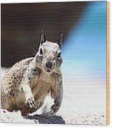 Charging Ground Squirrel Wood Print