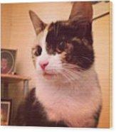 Charlee! #cat #cats #tagsforlikes Wood Print