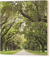 Charleston Avenue Of Oaks Wood Print