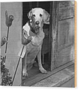 Charleston Shop Dog In Black And White Wood Print