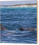 Chasing Dolphins  Wood Print