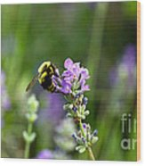 Chasing Nectar Wood Print