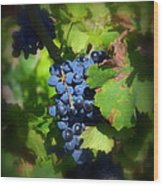 Chateauneuf Du Pape Hidden Treasure Wood Print