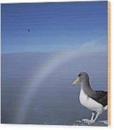 Chatham Albatross On Cliff Edge Chatham Wood Print