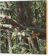 Chattahoochee River Trails Wood Print