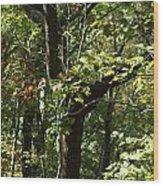 Chattahoochee Riverwalk Wood Print