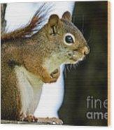 Chatty Squirrel Wood Print