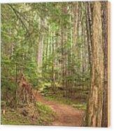 Cheakamus Lake Path Wood Print