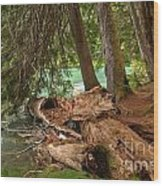 Cheakamus Lake Rainforest - British Columbia Wood Print