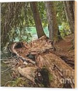 Cheakamus Lake Shoreline Wood Print