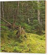 Cheakamus Rainforest Floor Wood Print