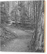 Cheakamus Trail In Black And White Wood Print