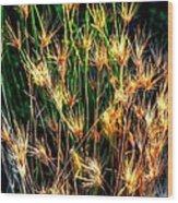Cheat Grass 15750 Wood Print