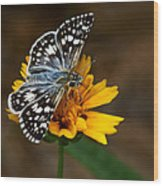 Checkered Skipper Square Wood Print