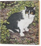 Checkers The Cat Wood Print