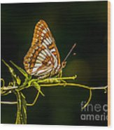 Checkerspot Butterfly Wood Print