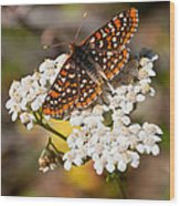 Checkerspot Butterfly On A Yarrow Blossom Wood Print