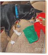 Looking For His Gifts Wood Print