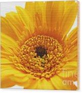 Cheerful Yellow Wood Print