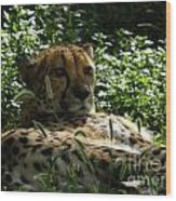 Cheetah 2 Wood Print