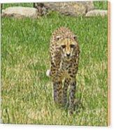 Cheetah Approaching Wood Print