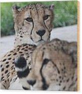 Cheetah Awakening Wood Print