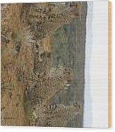 Cheetah Chatter Wood Print